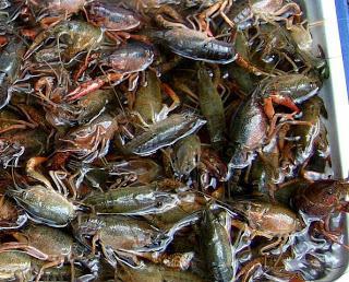 чеснок как приманка для рыбы