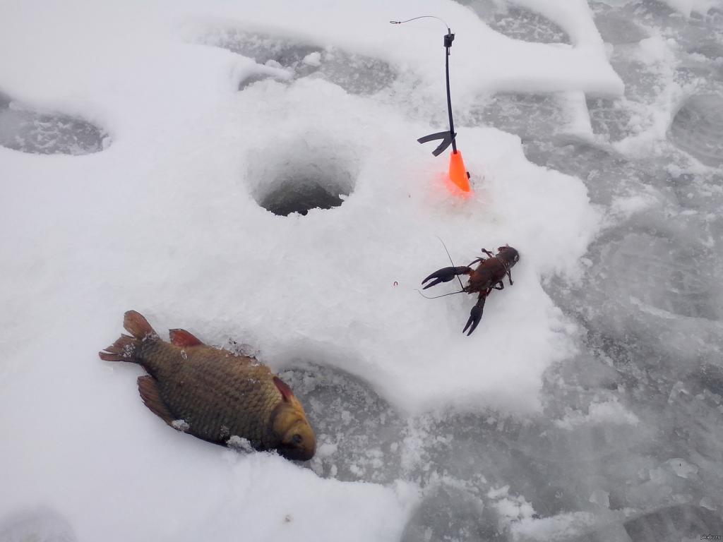 Зимняя рыбалка по первому льду: советы бывалых