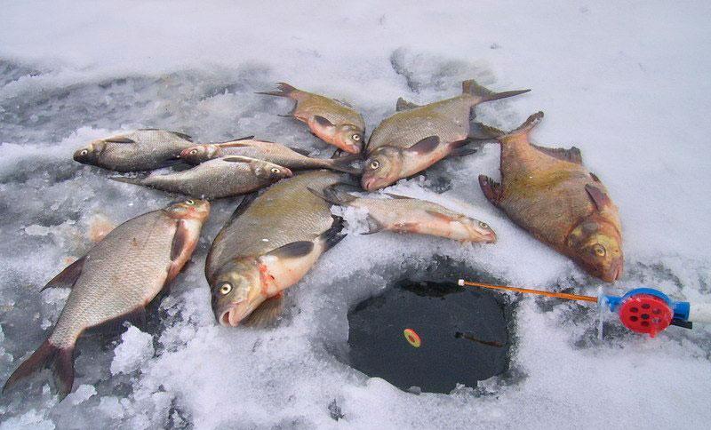 Тактика поиска и ловля леща днем на водохранилище