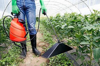 Внекорневая подкормка рассады томатов мочевиной 87