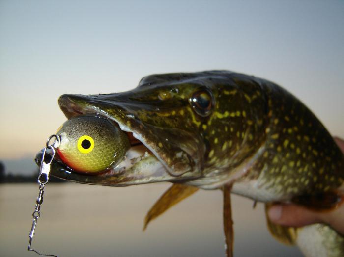 Рыбалка на щуку летом