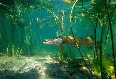 Рыбалка в мае на щуку