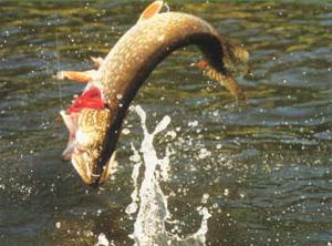 Рыбалка в Оренбургской области на щуку