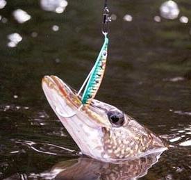как сегодня ловится рыба