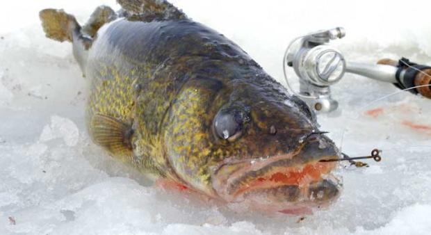 какая рыба клюет на волге в июне
