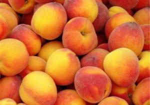 Персик посадка и уход в средней полосе