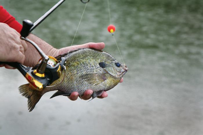 способы рыбалки видео