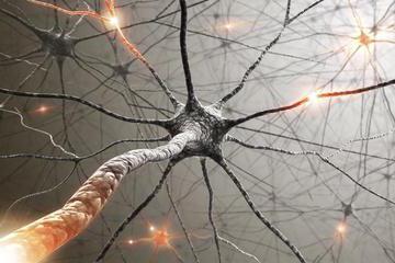 впервые нервная система появилась у