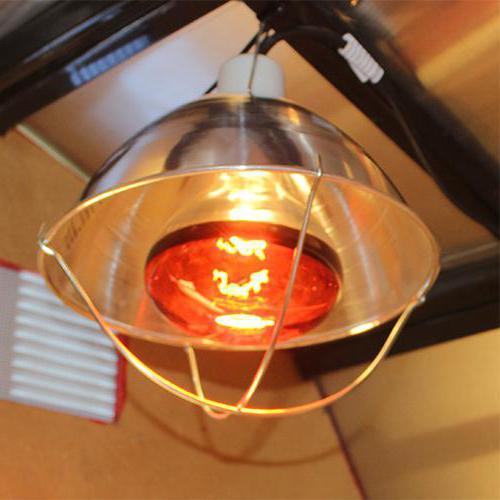 лампа обогрева для цыплят