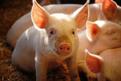 стимулятор роста для свинья цена