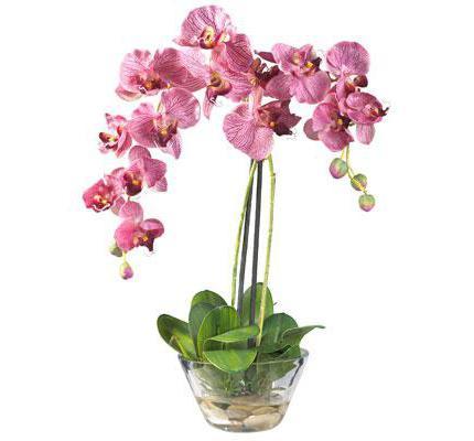 орхидея уход после покупки