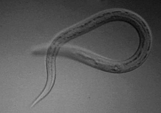 подкожные паразиты у человека из за чего