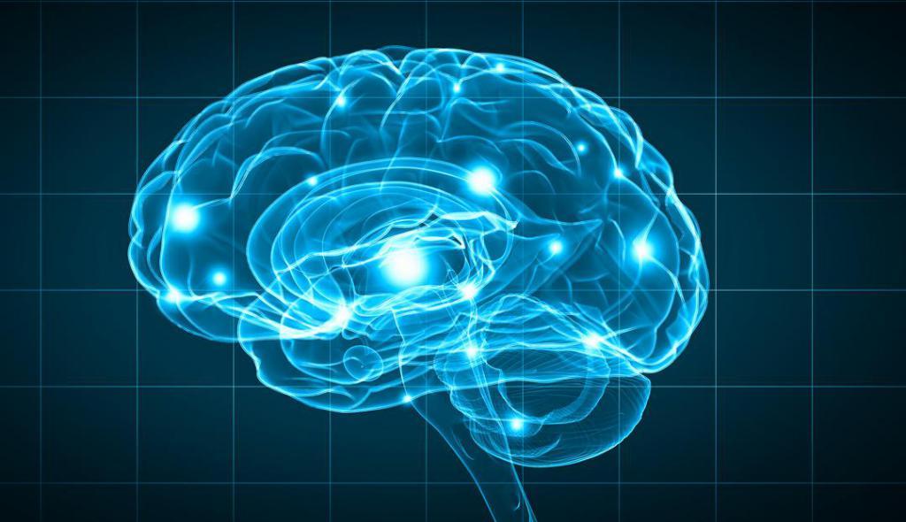 области головы мозг
