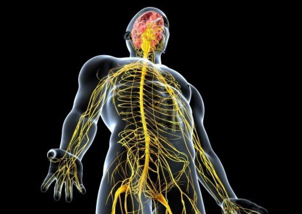 Картинки физиологии организмов