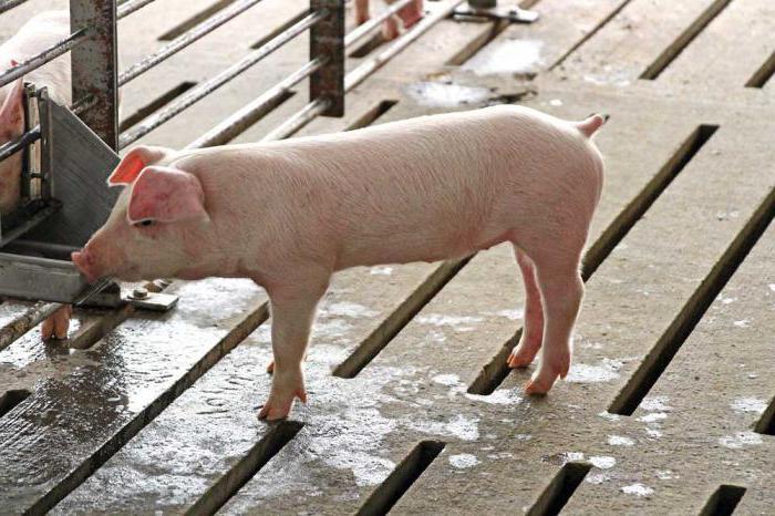 как сделать сарай для свиней
