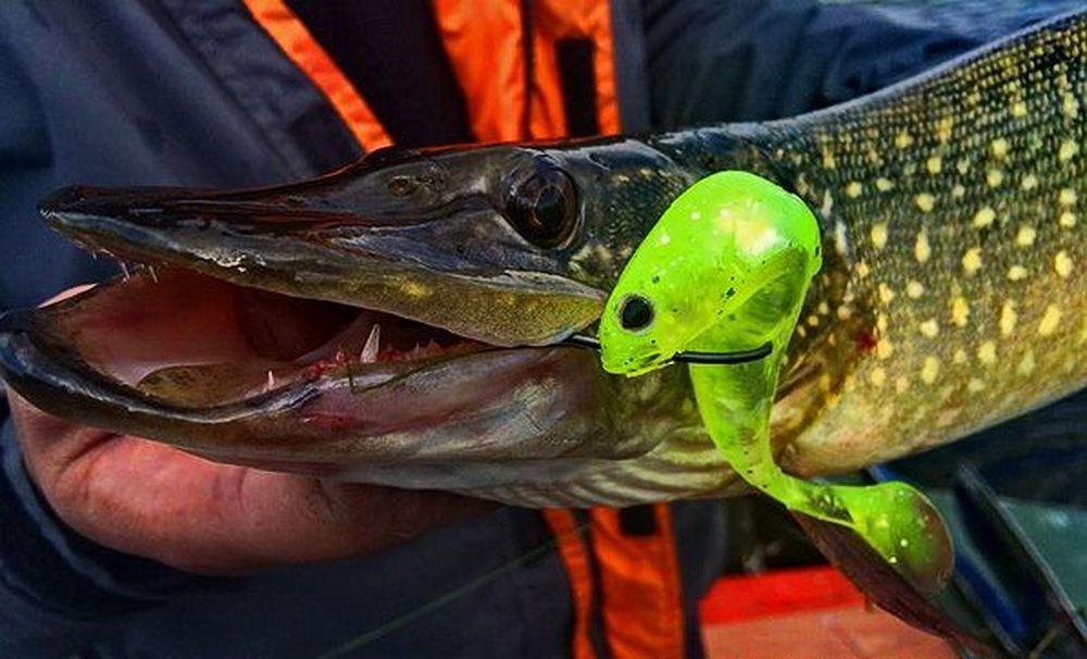КРУТЫЕ щучьи приманки для мелководья, рыбалка щучьи приманки — видео о рыбалке на viptourguide.ru