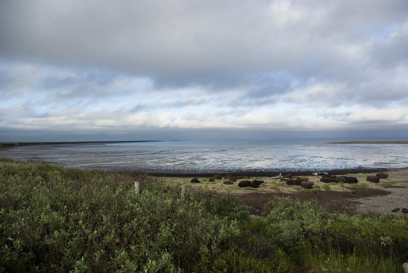 Мезенская губа: расположение, площадь акватории и фото залива