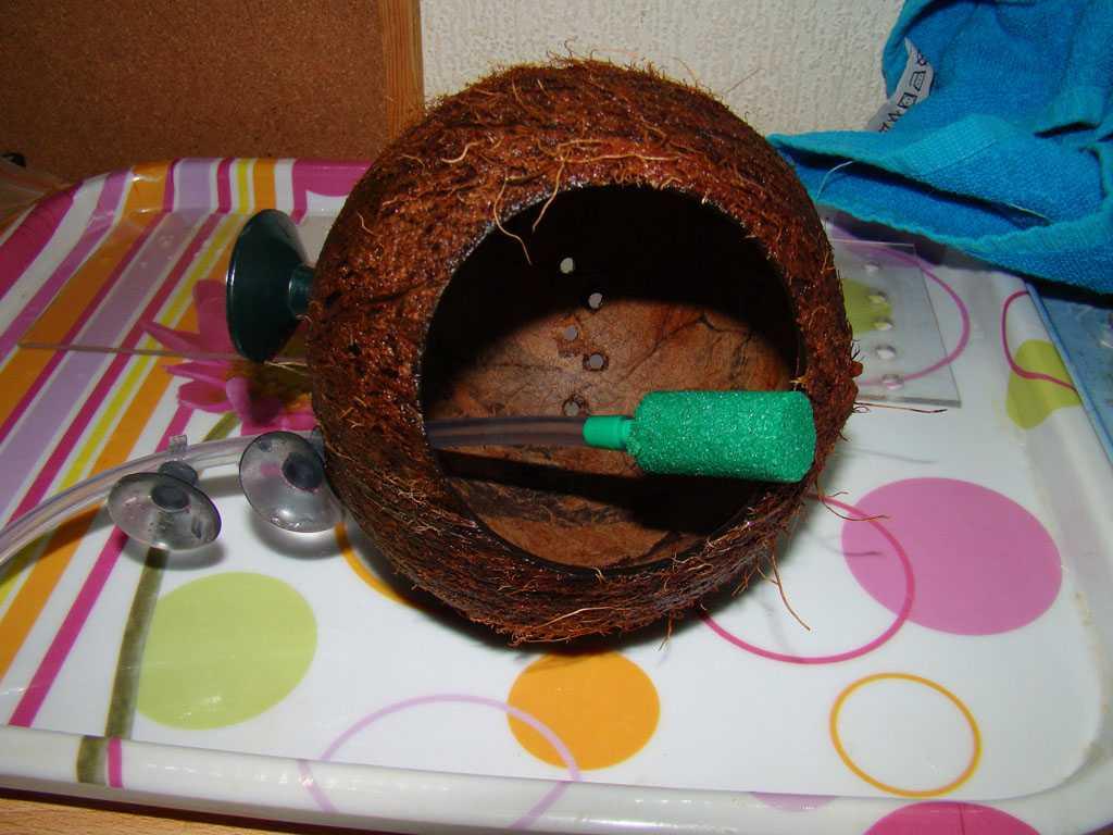 гроты из кокоса своими руками фото разблокирован только