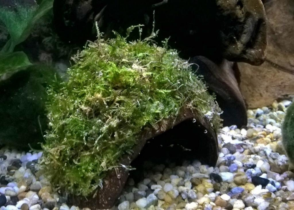how to cook coconut for an aquarium