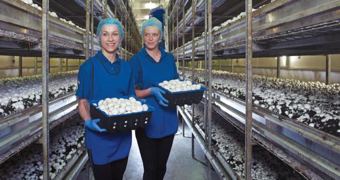 Грибная ферма — идея для собственного бизнеса