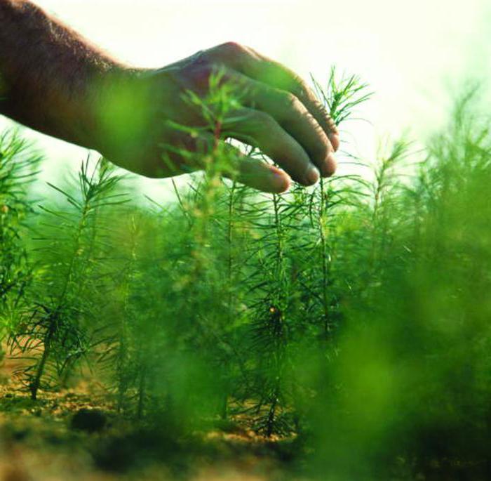 Биологические средства защиты растений профилактика