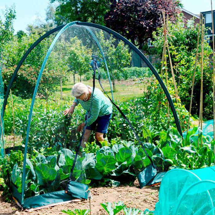 Биологические средства защиты растений способы