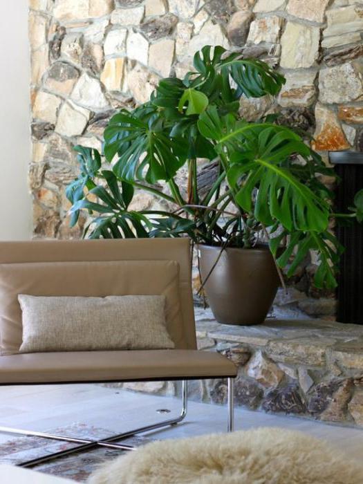 комнатные растения приносящие несчастье приметы