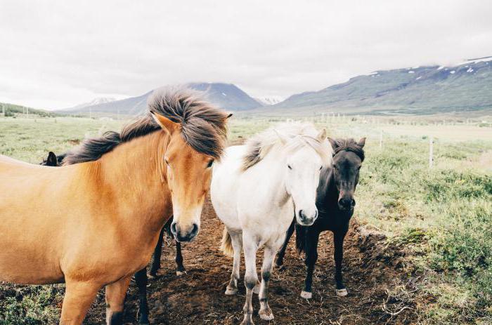 Сонник: к чему снится табун лошадей?