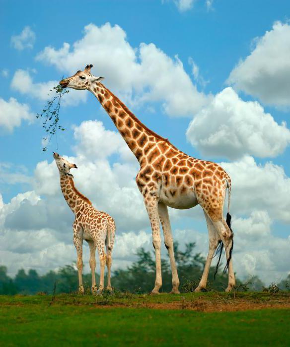 загадки с ответами про животных 3 класс