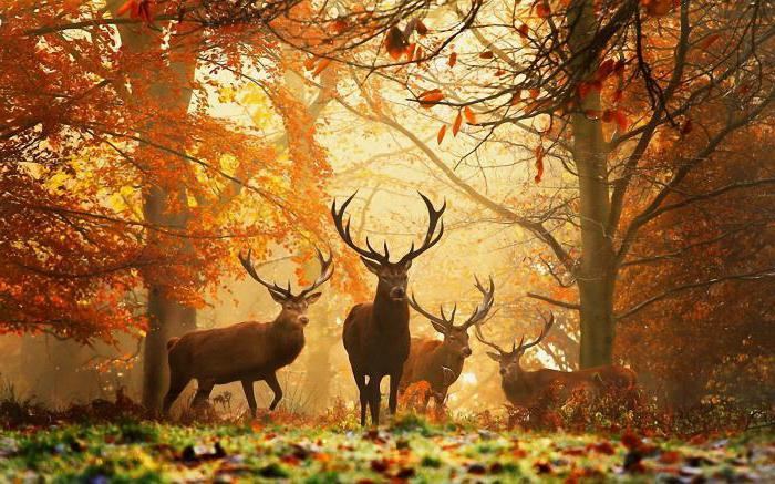 викторина для детей про осень
