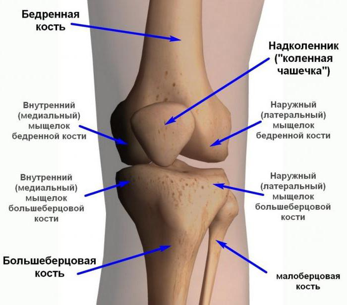 коленный сустав связки
