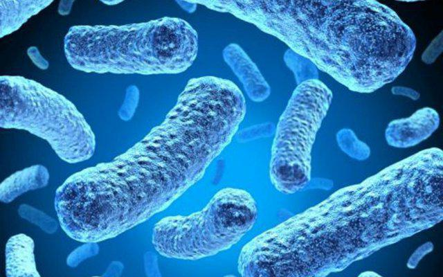 Рост микроорганизмов обнаружен что это 16