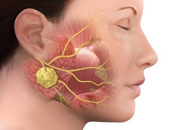 Болит правый бок со спины в пояснице к какому врачу обратиться