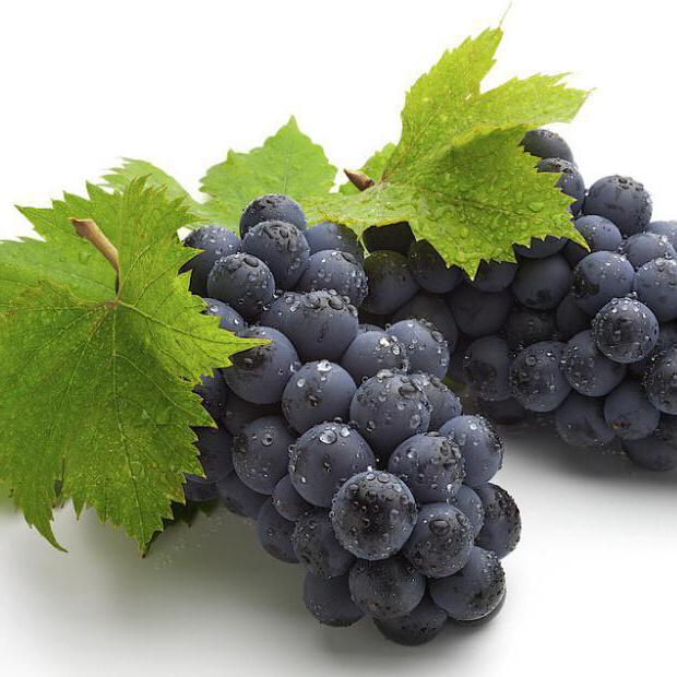 можно ли вырастить виноград из косточки
