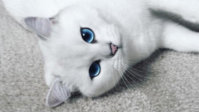 Серая кошка с зелёными глазами фото