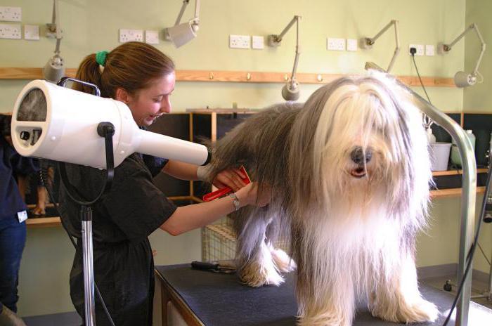 профессии связанные с заботой о животных
