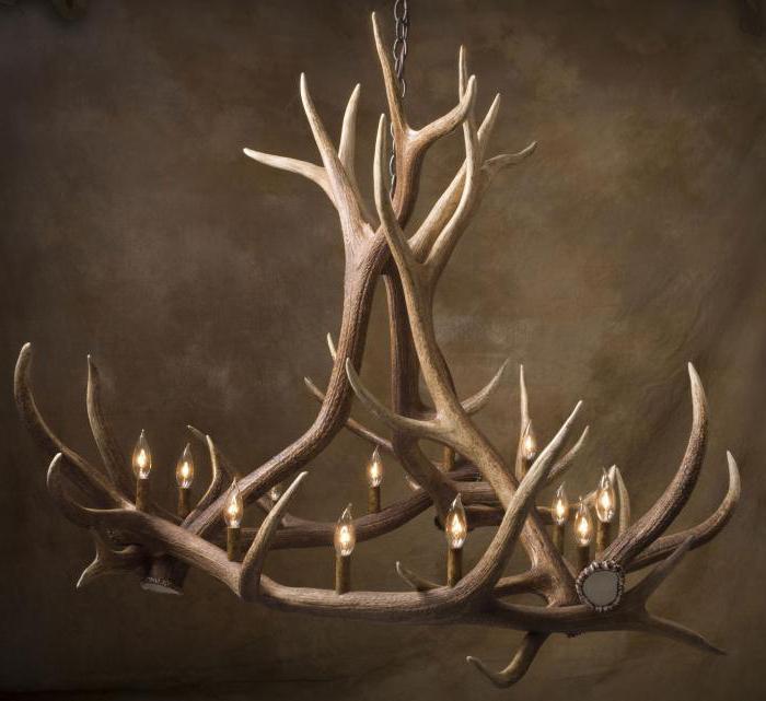 Что необычного и зачем скупают рога лося?