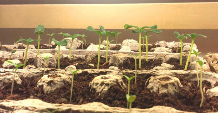 какие условия нужны для прорастания семян