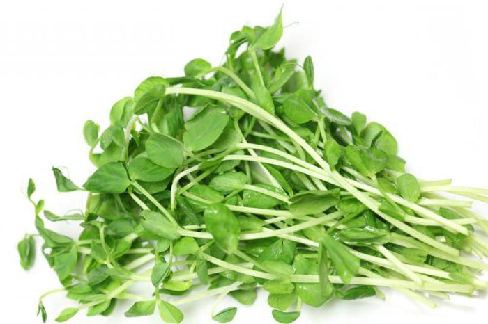 Виды салатов листовых