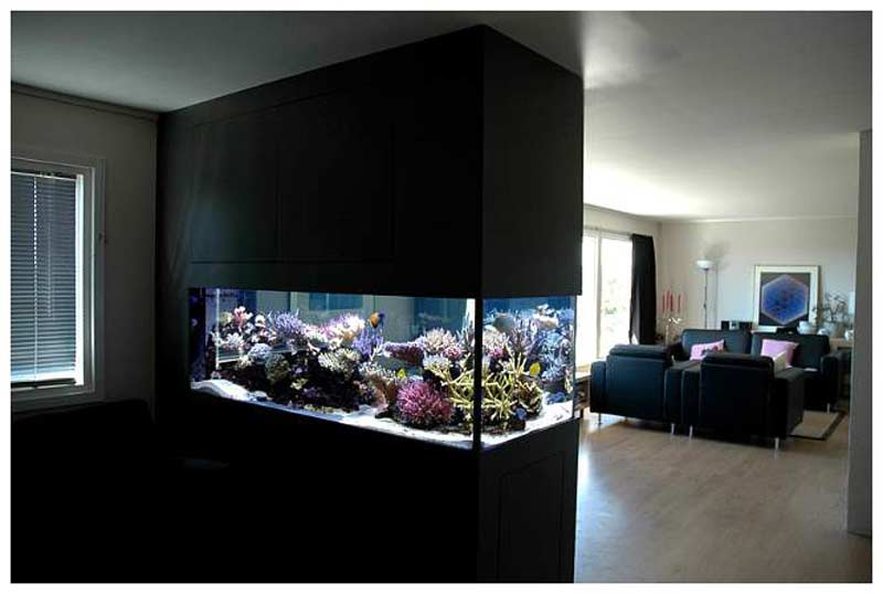 pros and cons of aquariums built into the wall