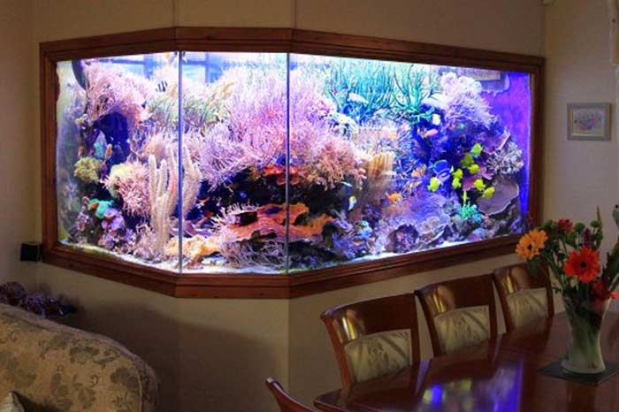 how to make a built-in aquarium in the wall