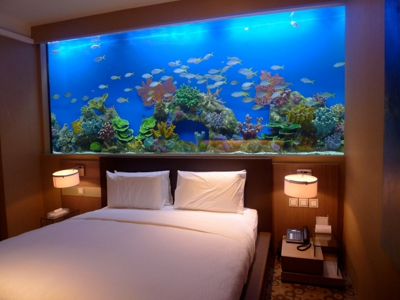 do-it-yourself aquarium built into the wall