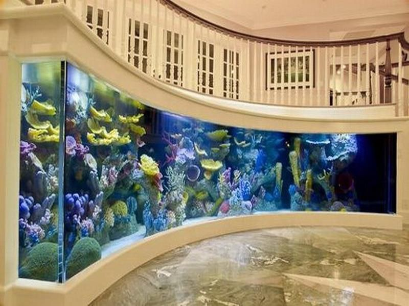 photo of built-in aquariums in the wall