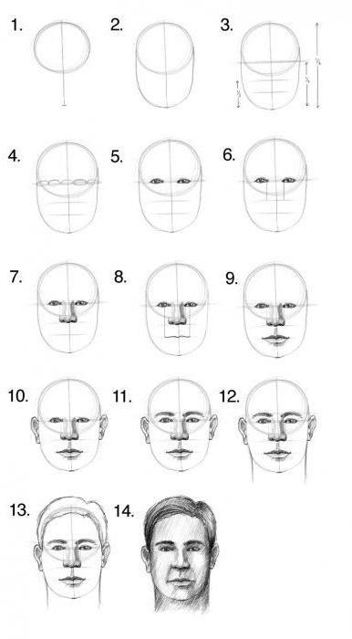 что картинки как нарисовать голову человека поэтапно винир это