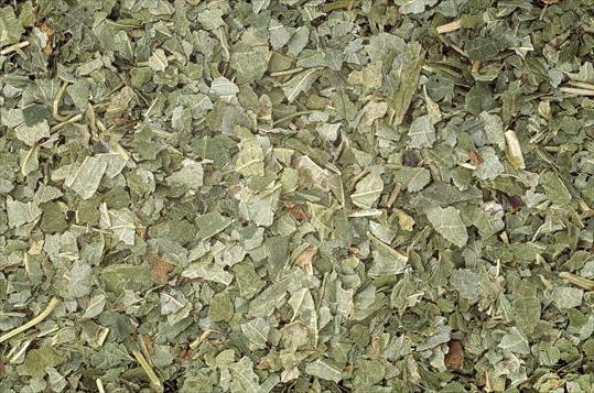 можно ли ферментировать листья смородины