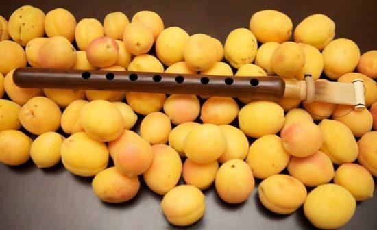 apricot tree duduk