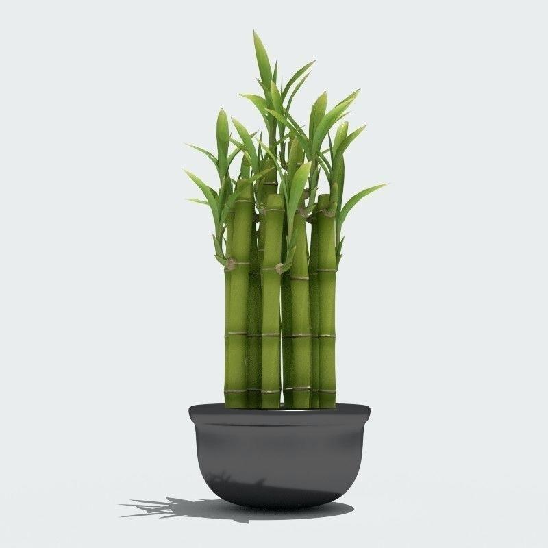 Цветов химки, купить бамбук растение в москве