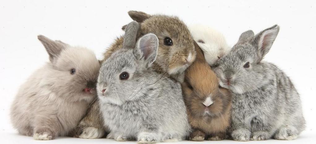 пять кроликов картинка мимо торговых точек
