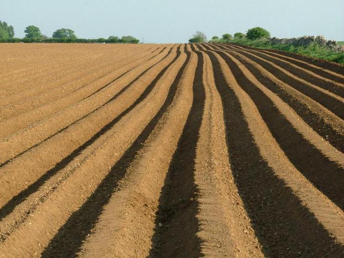 купля продажа земель сельскохозяйственного назначения