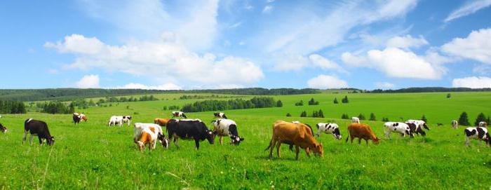 порядок продажи земель сельскохозяйственного назначения
